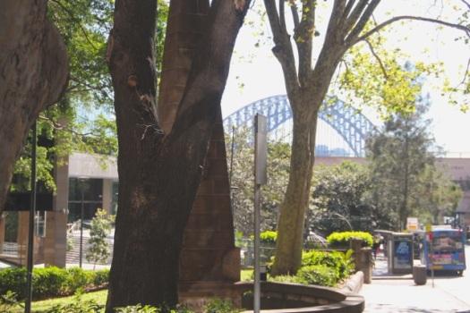 the bridge from jessie st gardens